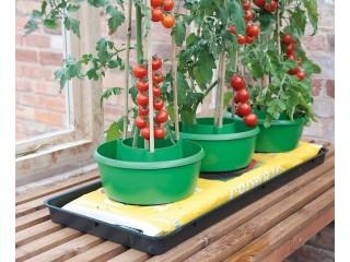 Tomatenbewässerungsring